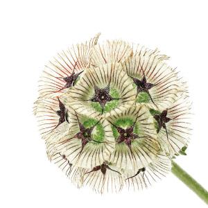 alkaitis-flower-skin-types